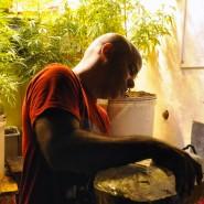 Seit Mai legal: Ein Uruguayer baut in seinem Haus in Montevideo Cannabis für den Eigenbedarf an.