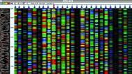 Vier Farben , vier DNA-Bausteine: Die Analyse einer Gensequenz.
