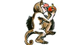 Wie vom wilden Affen gebissen