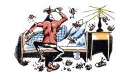 Kein Mitleid mit der Kakerlake: Auch der Käfer hat einen Knackpunkt.