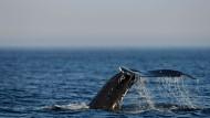 Auf dem Weg: Leviathan
