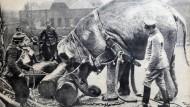 epaper 1914-11-18 I. WK - Kurioses an der Front