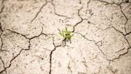 Weltweiter Temperaturanstieg? Von wegen: Laut eines AfD-nahen Experten wird sich die Erde erst 2100 um einen Grad erwärmt haben und mit den Menschen hat das sowieso nichts zu tun. Dass 97 Prozent der Wissenschaftler da anderer Meinung sind, interessiert die Rechtspopulisten wenig.