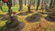 Schon im Jahr 2007 bohrte eine Maschine Löcher in den schleswig-holsteinischen Waldboden, um Buchen anzupflanzen.