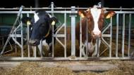 Nicht nur Ende der Milchquote drückt Preise