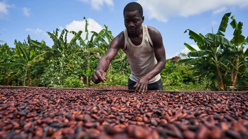 Segen und Fluch Ghanas: Die Abhängigkeit vom Weltmarktpreis für Kakao ist gestiegen.