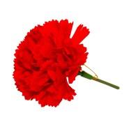 Die rote Nelke als Anstecknadel - das Parteisymbol der Linken.