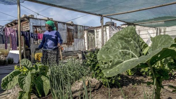 Wie Urban Farming die Welt ernähren wird