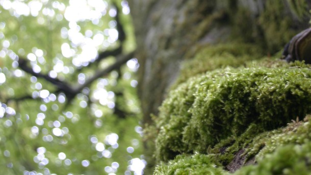 Ein fabelhafter Wald