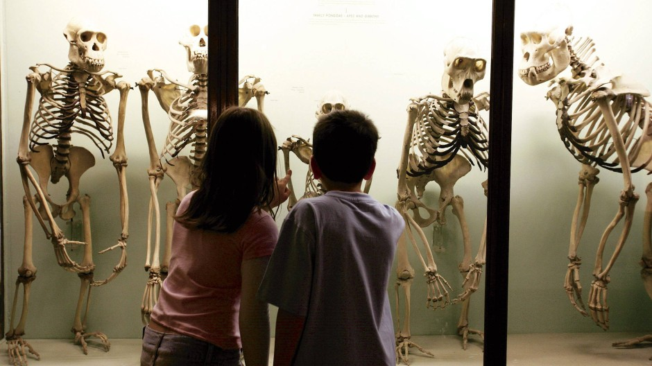 Diese Affen rennen nicht mehr: Gruselkabinett im Horniman Museum.
