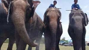 Und was halten Sie von Elefantenpolo?