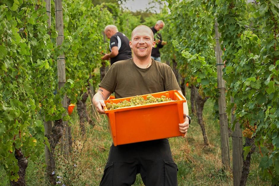 Die dritte Generation: Moritz Haidle führt heute das Weingut seiner Familie.