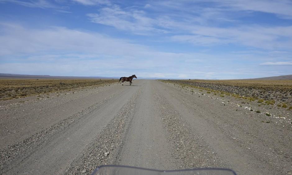 Jetzt kommt der Asphalt. Das Reisen wird dadurch jeden Tag ein wenig einfacher. Aber auch langweiliger. Jeder Meter Teerdecke raubt Patagonien ein Stück seiner Eigenart.