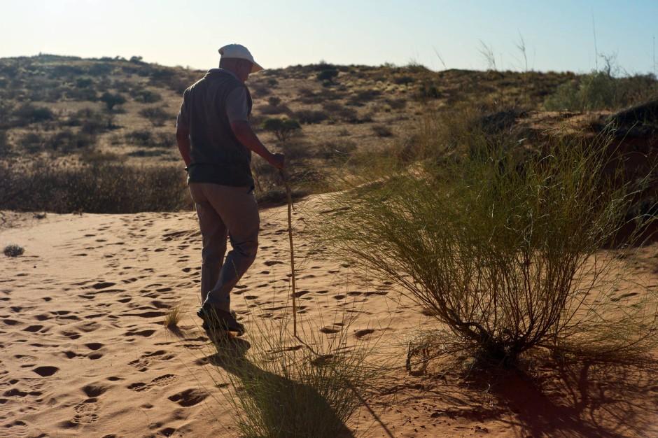 Frühmorgens wandern wir mit Andries durch die Dünen. Als San kann er die Spuren lesen wie eine Zeitung.