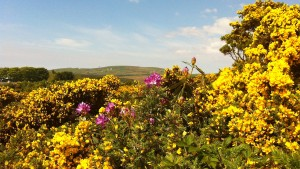 Paul Celans botanische Trittsiegel