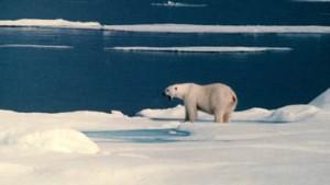 Auf der Suche nach dem König der Arktis