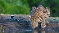 Auf Safari: Sehen und gesehen werden