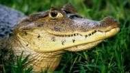 Auf Madagaskar soll es Zauberer und Hexen geben. Manchmal verwandeln sie Menschen in ein Krokodil.