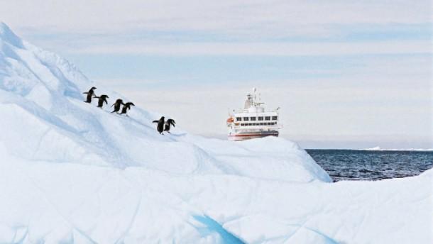 Ein Pinguin kommt selten allein