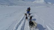 """""""Gib mir Hunde, gib mir Schnee, und den Rest kannst du behalten."""" Dass es mehr nicht braucht zum Lebensglück, wusste schon Knud Rasmussen."""