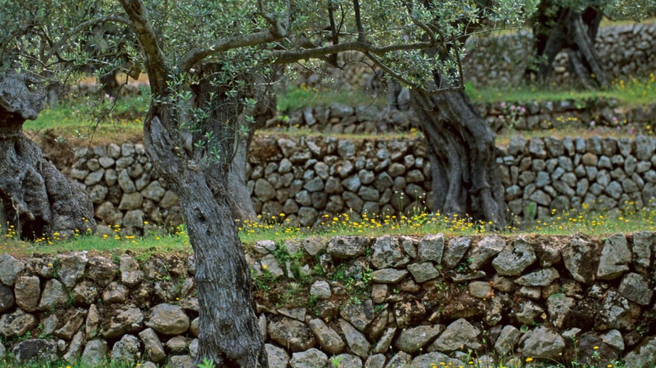 Stein auf Stein: Das Handwerk des Trockensteinmauerns drohte in Mallorca verloren zu gehen. Auch dank des Tourismus konnte es gerettet werden.