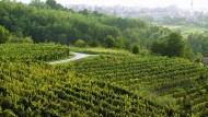 Hoch geschätzt schon in der römischen Antike und heute allzu oft als billiger Partyschaumwein serviert – dabei gibt es auch vom Prosecco Spitzenqualitäten.