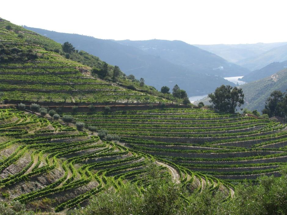 Dreihundert Jahre Handarbeit: So lange hat es gedauert, um aus dem Tal des Douro das spektakulärste aller Weinbaugebiete zu machen.