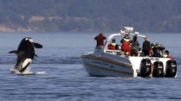 Alles nach den Walen