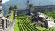 Wehrhafter Wingert: Die Rebzeilen zwischen den Festungsmauern des Castelgrande von Bellinzona zeugen davon, dass der Weinbau jahrhundertelang nicht nur die Landschaft, sondern auch die Kulissen der Tessiner Städte geprägt hat.