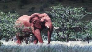 Spröder Charme der Namib