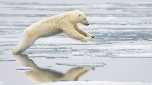 Wanderer im kalten Polar