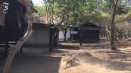 Der Kampf der Komodowarane