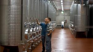 Winzer liefern Ernte an die Staatsweingüter