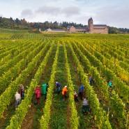 Kulturlandschaft: Weinernte am Fuß der Abtei St. Hildegard bei Rüdesheim