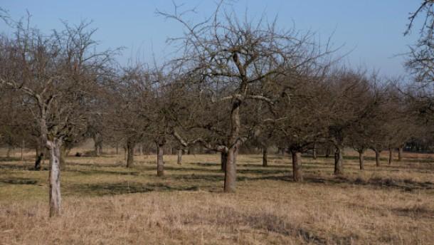 Äppelnetz für Streuobstwiesen