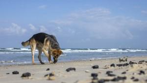 Pandemiehund am Strand