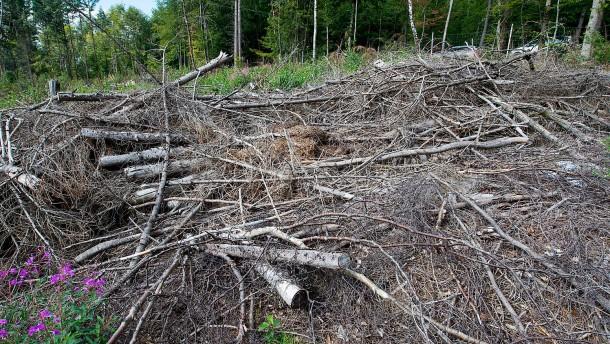 Feuerwehren müssen Bodenfeuer in Wäldern löschen