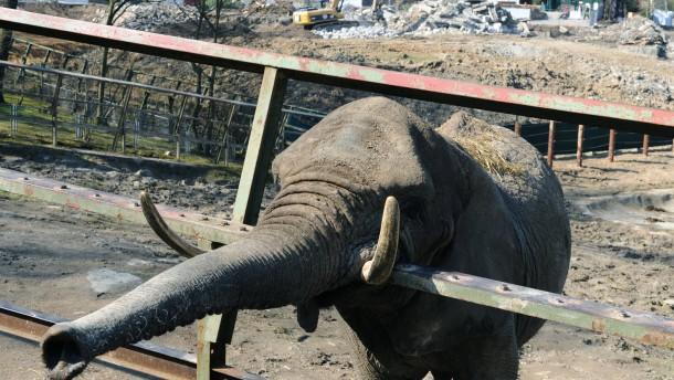 Neue Elefanten-Anlage im Opel-Zoo wird gebaut