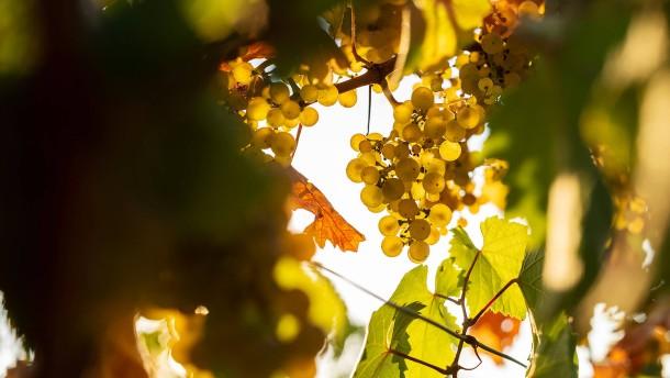 Wein in besonderer Lage