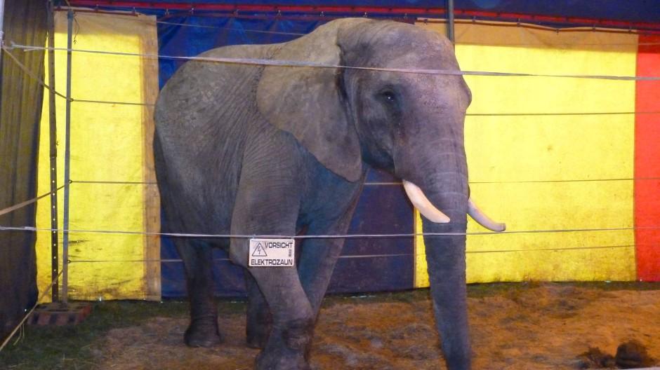 So etwas soll es nach dem Willen der Landesregierung Hessens bald nicht mehr geben: Zirkuselefant