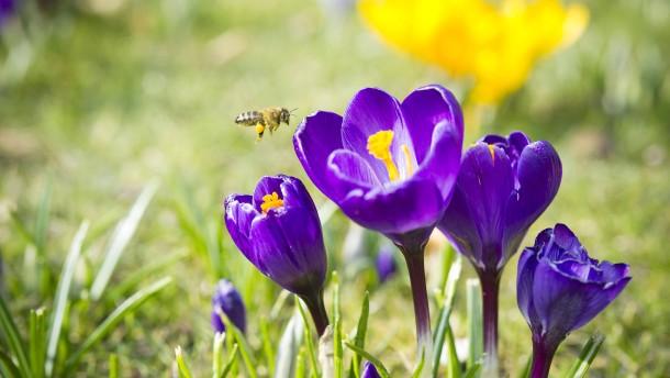 Der Winter, der ein Frühling war