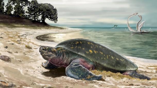 Älteste fossile Meeresschildkröte entdeckt