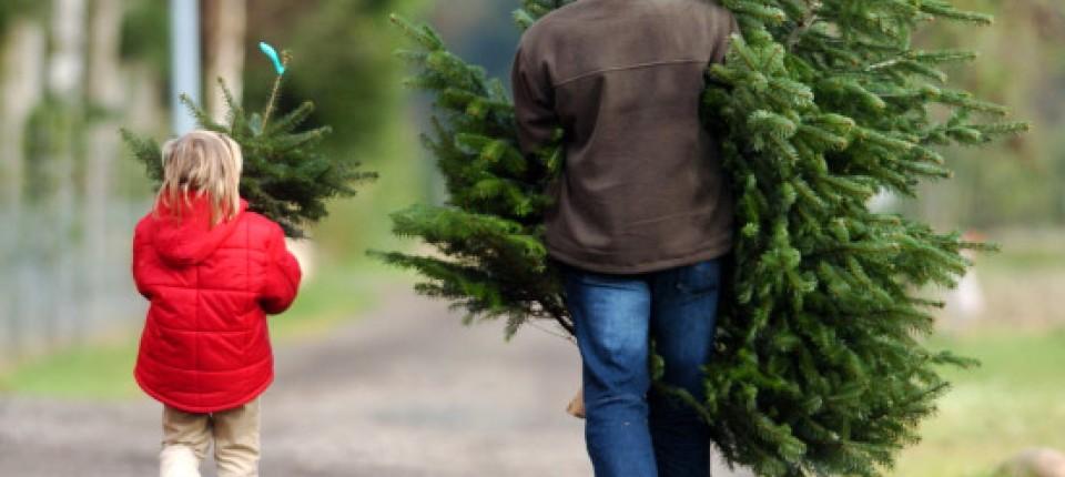 Weihnachten Mit Der Säge Zum Tannenbaum Region Und Hessen Faz