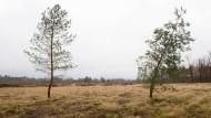 Im Hessischen Ried leidet der Wald unter einem zu niedrigen Grundwasserspiegel.