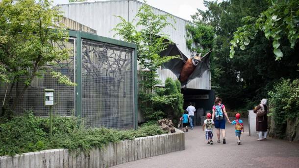 Zoo - Der Zoo Frankfurt will in den nächsten Jahren mehrere große Gehege und Häuser neu gestalten, unter anderem die Pinguinanlage und das Grzimekhaus
