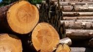 Waldreichstes deutsches Land: Hessen hat einen Wald-Flächenanteil von knapp 40 Prozent.