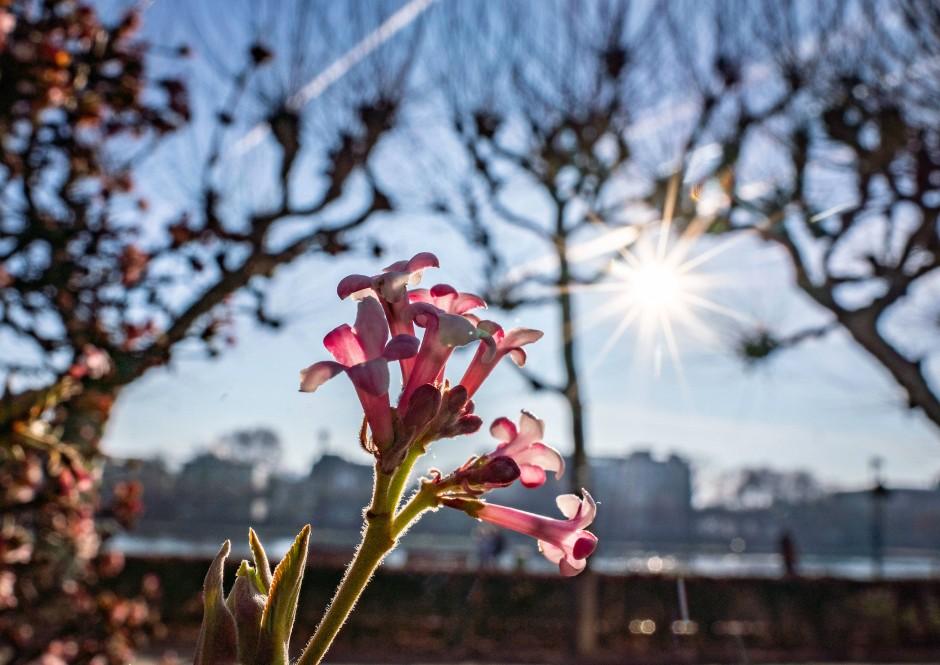 Vitamin D: Sonnige Tage im Winter helfen gegen Winterblues.