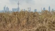 Plattgedrückt: Mag auch manchem ein Teil des Sommers fiel zu nass vorgekommen sein, das Hessen-Wetter 2016 war zu trocken