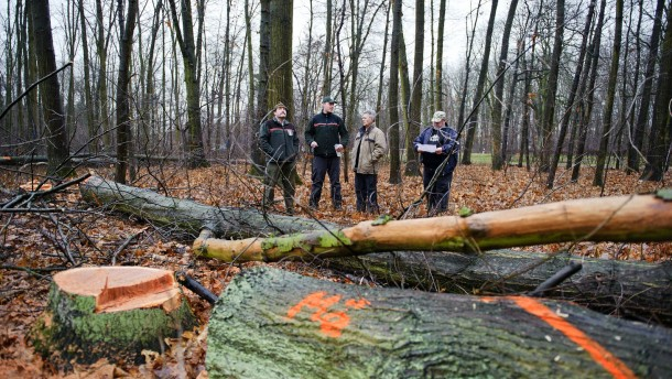 Holzsammler -  Bürger, die mit Holz heizen, lassen sich vom Forstamt Groß Gerau, hier in einem Wald bei Nauheim, Holz zuteilen. Es wird markiert und muss von den Käufern später zerkleinert und abgeholt werden.