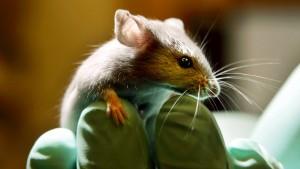 Abwägen zwischen Forschung und Tierleid